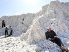 Il cotone ha fatto il giro del mondo