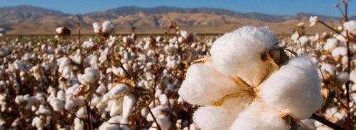 Il cotone a stelle e strisce segue nuovi protocolli di sostenibilità
