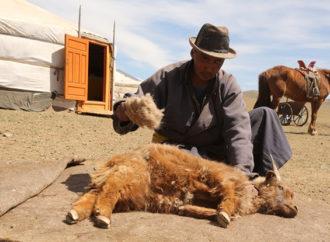Saldarini, in Mongolia per il cachemire d.o.c.