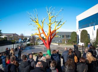 I colori della gratitudine sull'albero di Filmar