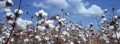 A picco il prezzo del cotone